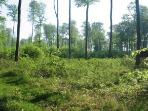Altersklassenwald im Schlagbetrieb 5-12-2014
