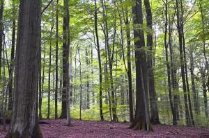 Dauerwald Steigerwald 14-9-2015