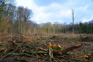 Eichenwald-Ernte bei Braunschwg 24-10-2013
