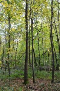 Eichenwaldbau Weber 13-10-2017 a
