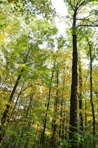 Eichenwaldbau Weber 13-10-2017 c