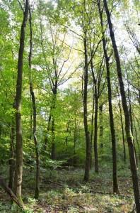 Eichenwaldbau Weber 13-10-2017 e
