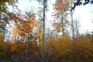 Elm Buchenwald c 17-11-2015 12244343_768208626639294_117562431591235619_o