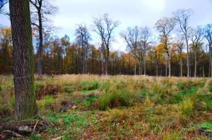 Essehofer Holz Ausfall Eichenpflanzung 22-11-2013
