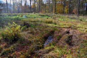 Essehofer Holz Bodenschäden im KSchl 22-11-2013