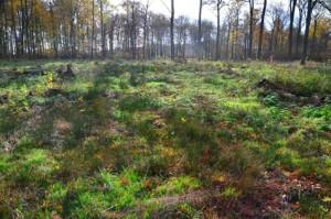 Essehofer Holz Flatterbinsen 22-11-2013