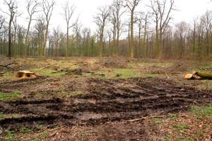 Essehofer Holz - Kahlschlag m Rückespur 22-11-2013
