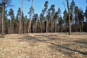 Forstmulcher - Vorbereitung f maschinellen Pflanzgang 12-3-2018 a