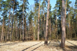 Forstmulcher - Vorbereitung f maschinellen Pflanzgang 12-3-2018 c
