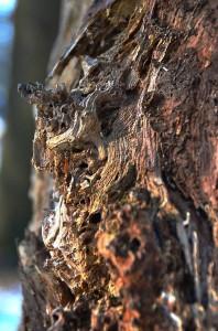 Naturwald 22-1-2017 Detail