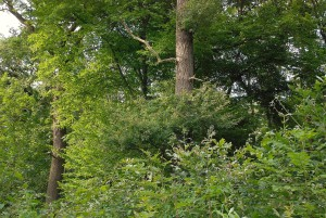 Rotenkamp Eichenjungwald d 17-8-2012