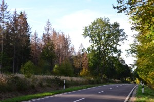 Waldrand Straße 7-10-2018