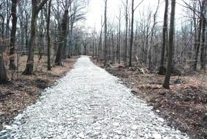Wegebau im FFH-Gebiet Rieseberg