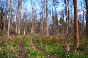 ordnungsgemäße Forstwirtschaft 29-4-2017 b