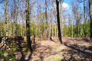 ordnungsgemäße Forstwirtschaft 29-4-2017 c