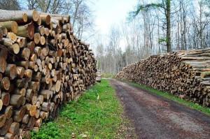ordnungsgemäße Forstwirtschaft 29-4-2017 d
