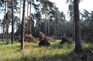 verkaufte Kiefernwälder 22-8-16 a