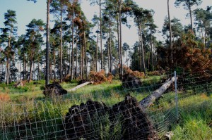 verkaufte Kiefernwälder 22-8-16 b