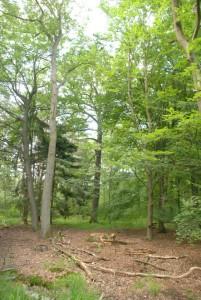 Eremit Baumstumpf 10-10-12