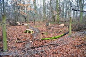 Spechtwald kap Zaun + Baumstümpfe
