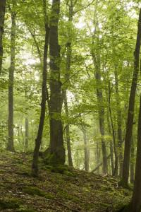 Nationalpark Nordsteigerwald