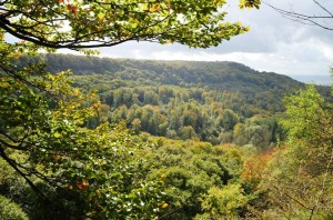 Wildniswald 7-10-2017 a