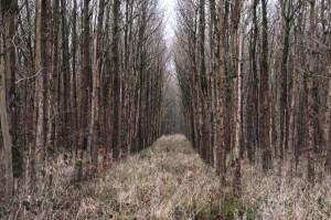 lichter Wirtschaftswald 6-3-2017 c