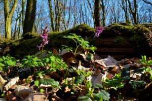 Naturwaldreservat Rieseberg 6-3-2018