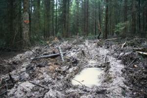 Rückegasse Schlammwüste 31-8-2012 zertifizierter Wald