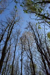 Ackeraufforstung Eichenmischwald 15-6-2019 b