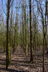 Ackeraufforstung Eichenmischwald 15-6-2019 c