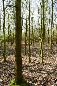 Ackeraufforstung Eichenmischwald 15-6-2019 d
