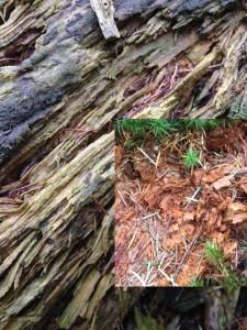 Holzzersetzung durch Pilze 17-11-2017