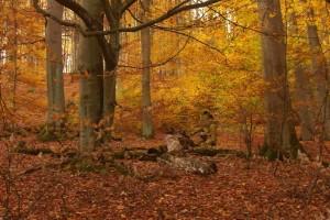 Laubabwurf - Bäume auf Toilette 8-10-2017