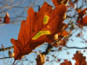 grüne Inseln auf braunen Blättern 4-10-2017