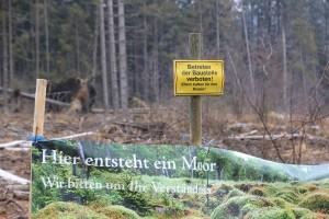 Hier entsteht Moor NP Hunsrück 26-3-2018 a