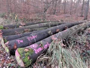 Beienroder Holz 13-12-2019 a