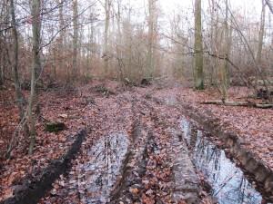 Beienroder Holz 13-12-2019 b