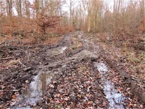 Beienroder Holz 13-12-2019 c