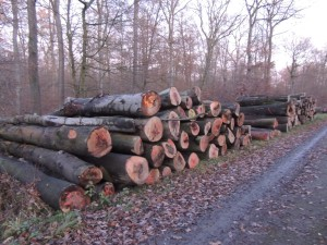 Beienroder Holz 13-12-2019 d