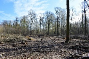 FFH-Kahlschlag NS Forstabteilung 2032a - 25-3-2019 - b
